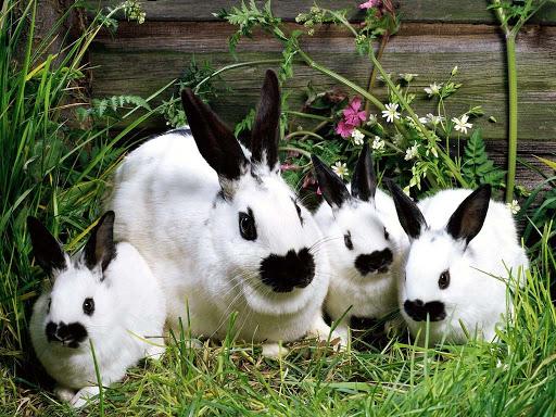 кролиководство-2020