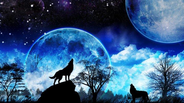 волки-воют